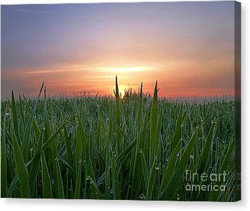 Spring Sunrise Canvas Print by AmaS Art