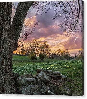 Spring Sunset Square Canvas Print by Bill Wakeley