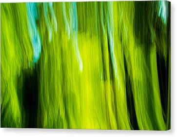 Spring Swirls Canvas Print by Kunal Mehra