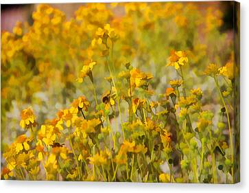 Spring Canvas Print by Tammy Espino
