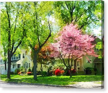 Spring - The Trees Are Flowering On My Street Canvas Print by Susan Savad
