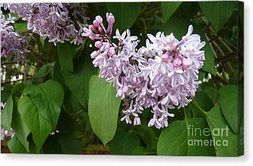 Spring Time Beauty Canvas Print