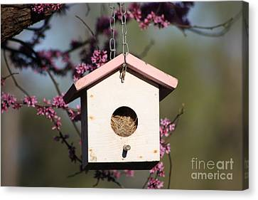 Spring Time Bird House Canvas Print