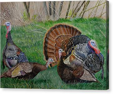 Spring Tom - Turkeys Canvas Print by Alvin Hepler