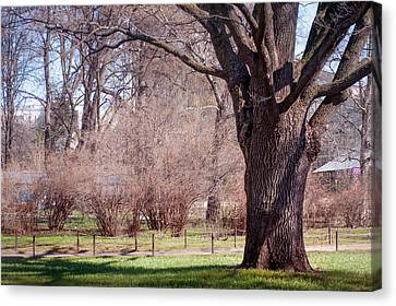 Spring Tree At Soft Rosy Spring In The Garden Canvas Print by Jenny Rainbow