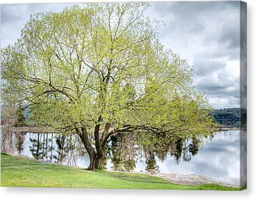 Spring Tree - Pinhey's Point. Ontario Canvas Print by Rob Huntley