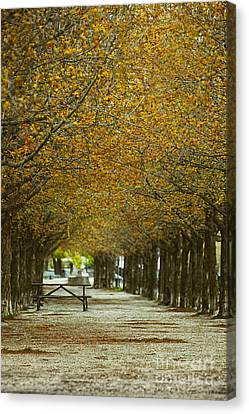 Canvas Print featuring the photograph Spring Trees Blossoming In Montreal by Sandra Cunningham