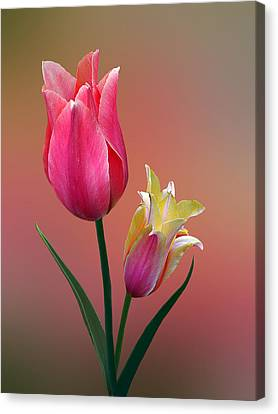 Canvas Print featuring the photograph Spring Tulips by Judy  Johnson