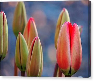 Canvas Print featuring the photograph Spring Tulips by Karen Horn