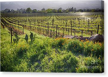 Spring Vine And Poppies In Napa Valley Canvas Print by George Oze
