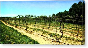 Spring Vineyard Ll Canvas Print