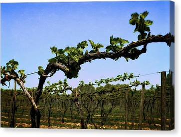 Spring Vineyard Canvas Print by Michelle Calkins