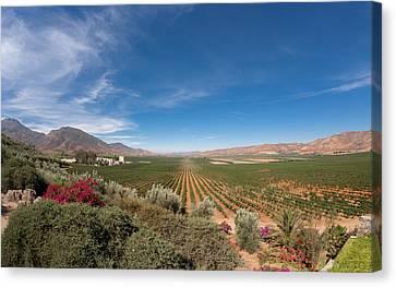 Spring Vinyard In Ensenada Mexico Canvas Print by Scott Campbell
