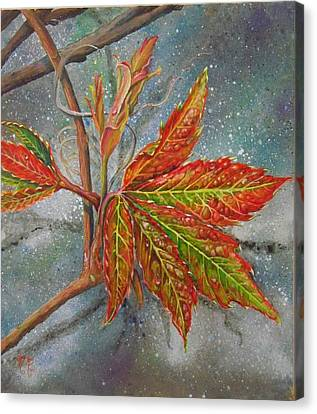 Spring Virginia Creeper Canvas Print