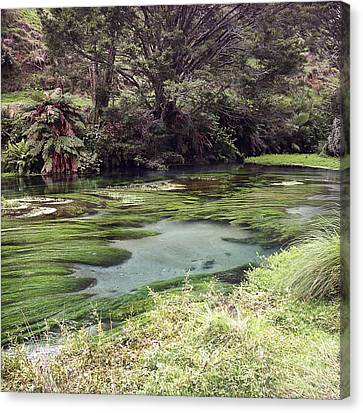 Spring Water Canvas Print by Les Cunliffe