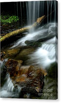 Spring Waterfall Monongahela National Forest Canvas Print by Thomas R Fletcher