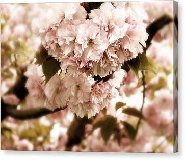 Spring Whisper Canvas Print