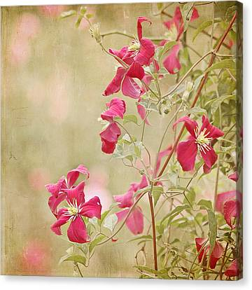 Spring Whisper Canvas Print by Kim Hojnacki
