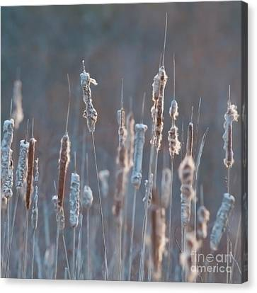 Spring Whisper... Canvas Print