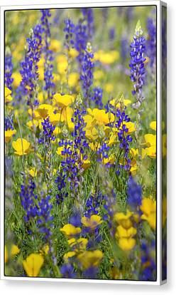 Spring Wildflower Bouquet  Canvas Print by Saija  Lehtonen