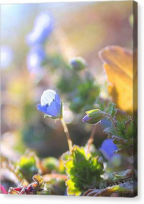 Canvas Print featuring the photograph Spring Wildflowers by Candice Trimble