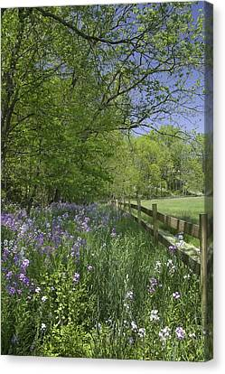 Keuka Canvas Print - Spring Wildflowers by Michele Steffey