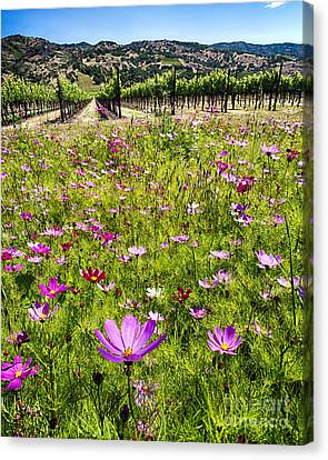 Wine Making Canvas Print - Spring Wildflowers Of Napa Valley by George Oze