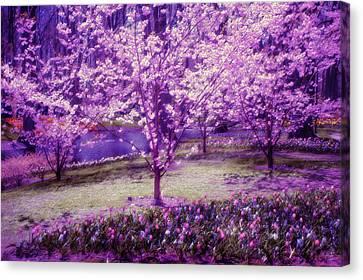 Spring Wonderland Pastel. Garden Keukenhof. Netherlands Canvas Print by Jenny Rainbow