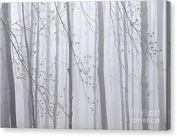 Spring Woodland Fog 1 Canvas Print by Alan L Graham