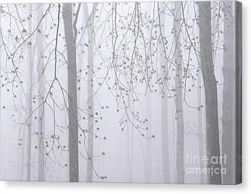 Spring Woodland Fog 2 Canvas Print by Alan L Graham