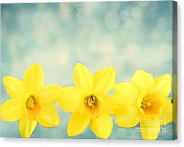 Spring Yellow Canvas Print by Darren Fisher