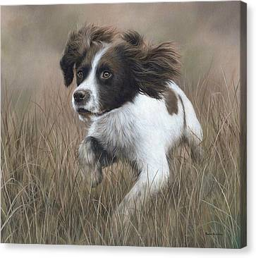 Springer Spaniel Painting Canvas Print by Rachel Stribbling
