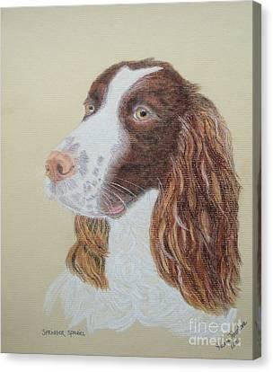 Springer Spaniel Canvas Print by Yvonne Johnstone