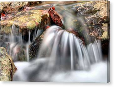 Canvas Print featuring the photograph Springing Forward by JC Findley