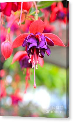 Springle Bells Canvas Print