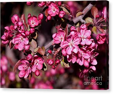 Canvas Print featuring the photograph Spring's Arrival by Roselynne Broussard
