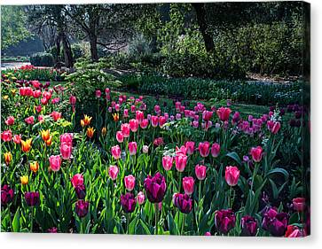 The Promise Of Spring Canvas Print by Lynn Bauer