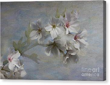 Springtime Canvas Print by Anne Rodkin