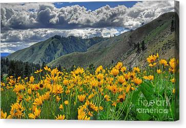 Canvas Print featuring the photograph Springtime At Gallagher by Sam Rosen