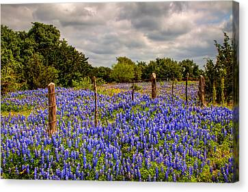 Springtime Beauty Canvas Print by Tom Weisbrook