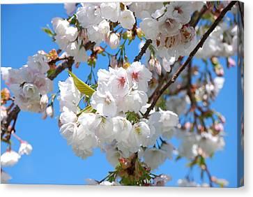 Springtime Blossoms Canvas Print by Richard Hinger