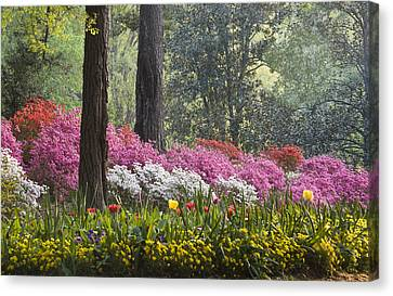 Springtime Canvas Print by Eggers Photography