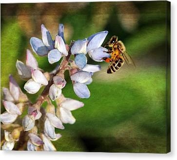 Canvas Print featuring the photograph Springtime I by Dawn Currie