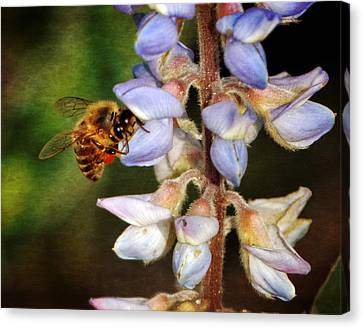 Canvas Print featuring the photograph Springtime II by Dawn Currie