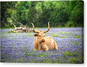 Springtime In Texas Canvas Print