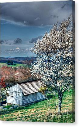 Springtime In The Blue Ridge Mountains I Canvas Print by Dan Carmichael