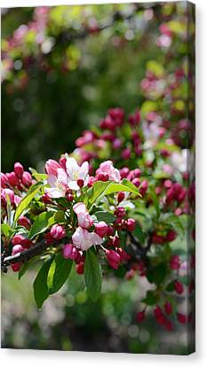 Canvas Print featuring the photograph Springtime by Linda Mishler