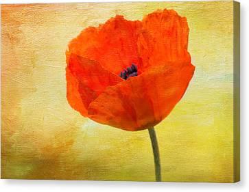 Springtime Poppy Beauty Canvas Print by Denyse Duhaime