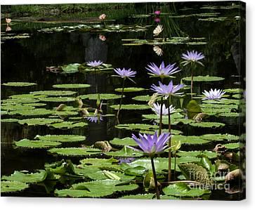 Sprinkling Of Purple Water Lilies Canvas Print