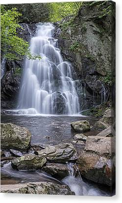 Spruce Flat Falls Gsmnp  Canvas Print